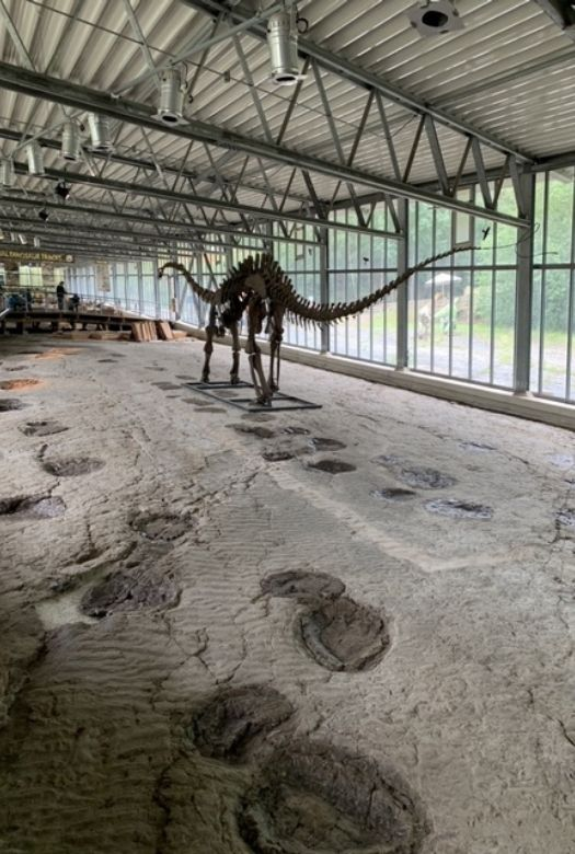 Europasaurus and sauropod tracks at Münchehagen Dinosaur Park; dinosaur tracks in Germany