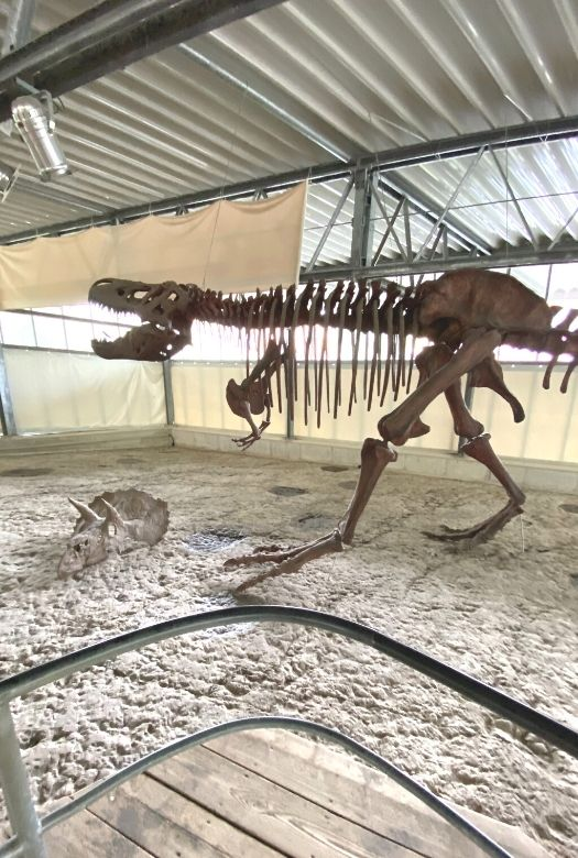 Neovenator fossil (and Triceratops scull) inside the Track Hall at Münchehagen Dinosaur Park