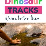 Pin: Great dinosaur tracks and where to find them: with image of a hand next to a ichnite