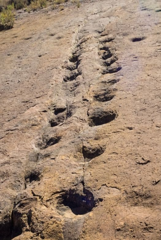 The 14 best places to see real dinosaur tracks, such as these sauropod tracks