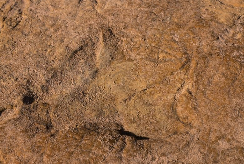 A dinosaur footprint from Portugall, one of the first dinosaur fossils ever found