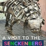 Pin: A visit to the Senckenberg Museum, with image of a Euplocephalus