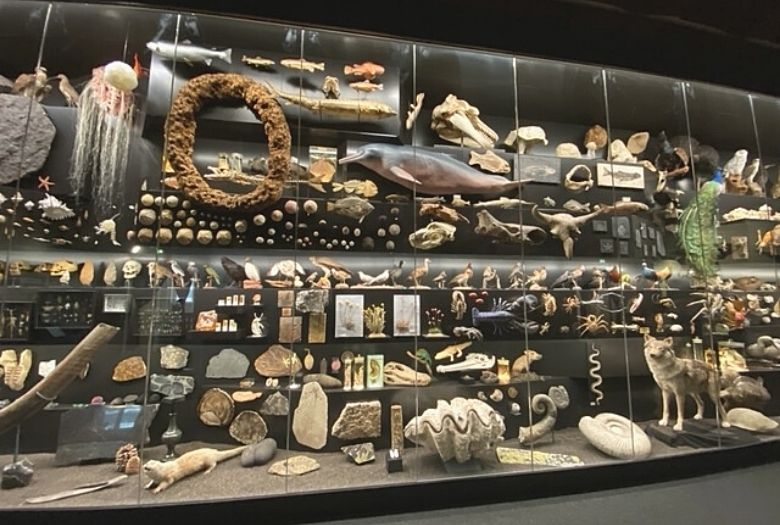 """""""The Fascination of Diversity"""" wall at the Senckenberg Museum."""
