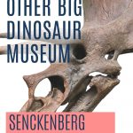 Pin: The other big dinosaur museum: Senckenberg Museum review, with image of a Triceratops skull