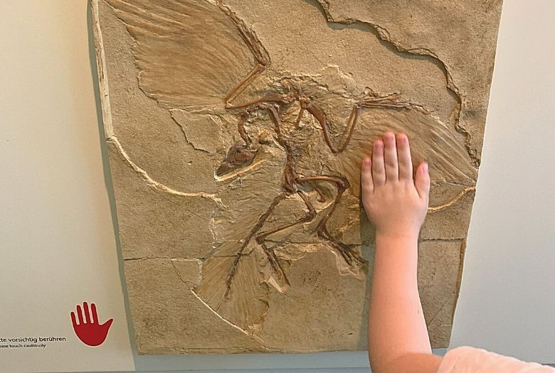 One of the hands-on exhibits at the Senckenberg Museum: children and other visitors are encouraged to touch any exhibits marked with a red hand, such as this Archaeopteryx fossil in stone.