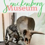Pin: What not to miss at the Senckenberg Museum: with image of Triceratops skeleton