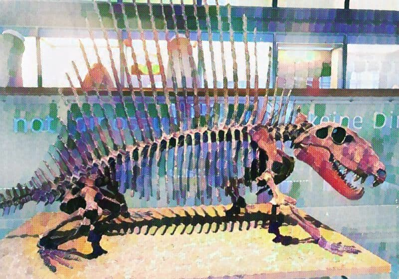 Dimetrodon fossils at the Brussels Royal Institute of Natural History